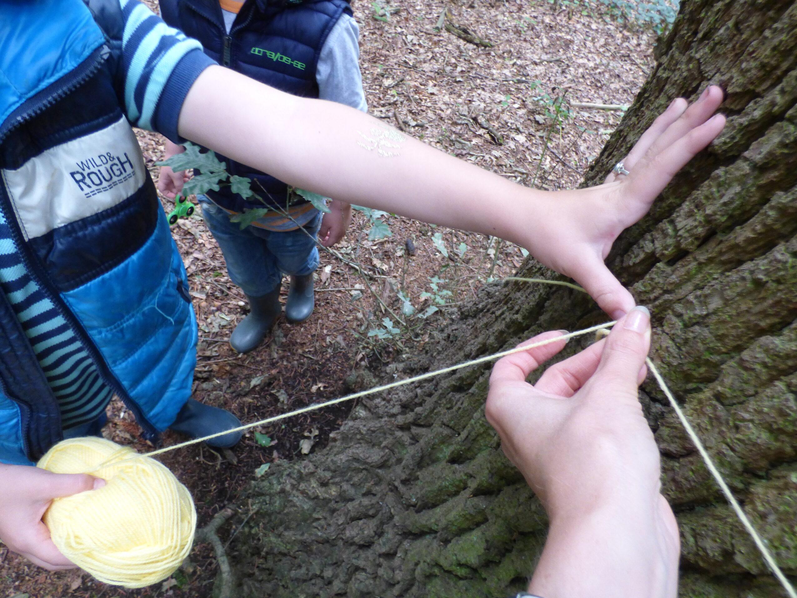 Rekenen en meten in het bos