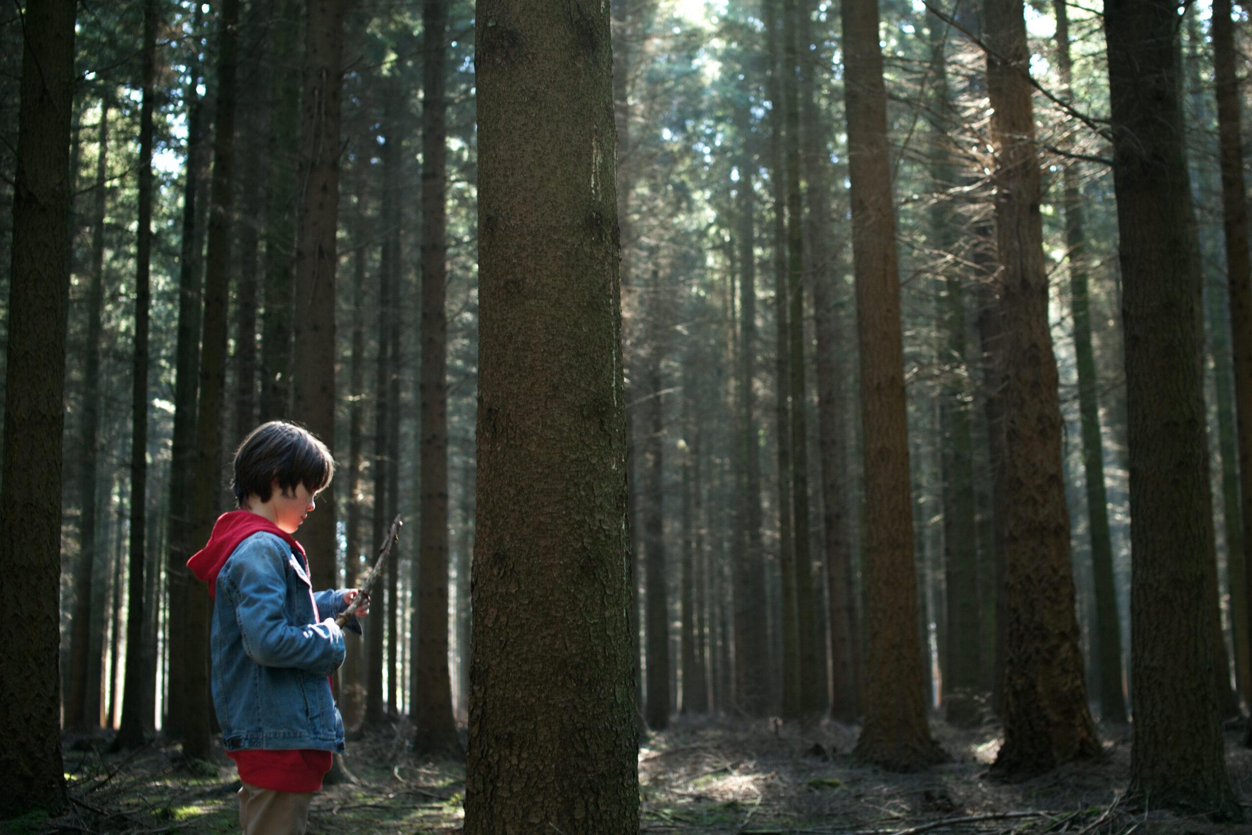 eng-stills-het-bos-_2